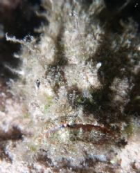Scorpionfish, up close and personal, taken at Sharksbay w... by Nikki Van Veelen